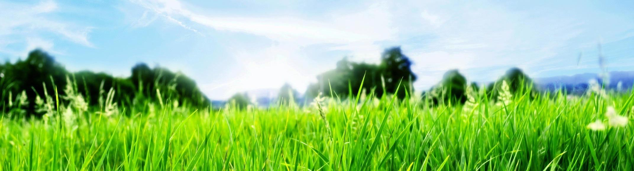 How to Cut Grass in Hot Weather and Keep It Green – 6 Easy Tips.