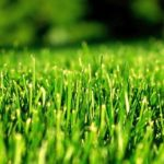 8 Important Tasks of Spring Lawn Care